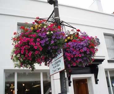 Picture for category Hanging Baskets